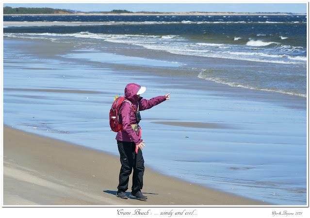 Crane Beach: ... windy and cool...