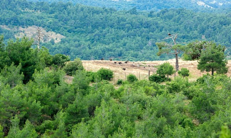 Το πρόγραμμα WWF Impact Ventures for Greece στο Δάσος Δαδιάς