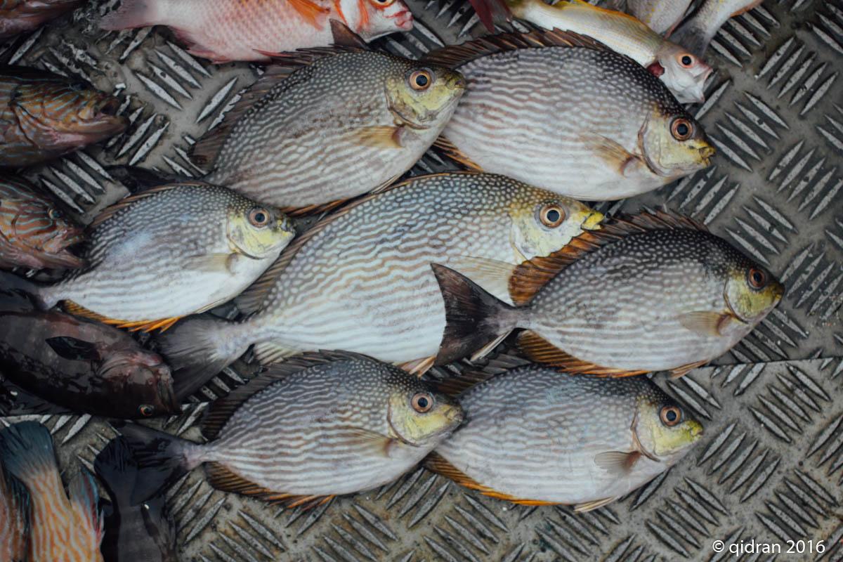 qidr.an ©: Pulau Kendi fishing trip