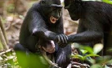 اللعب مع القرد والاسد
