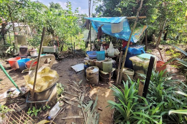 Retiree, 75, ordered to clear his secret garden in forest, posted on Wednesday, 31 March 2021