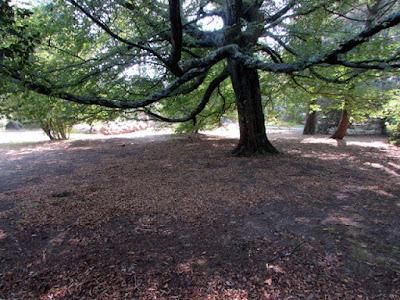 árvore no Jardim Botânico do Porto