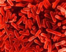 <alt img src='gambar.jpg' width='100' height='100' alt=' fertilizer bactery'/>