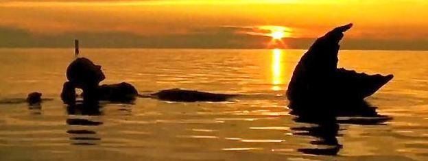BREAKING NEWS Mermaid Sighting in Erie Canal Yes Female ...