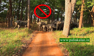 rules and regulations of dudhwa national park