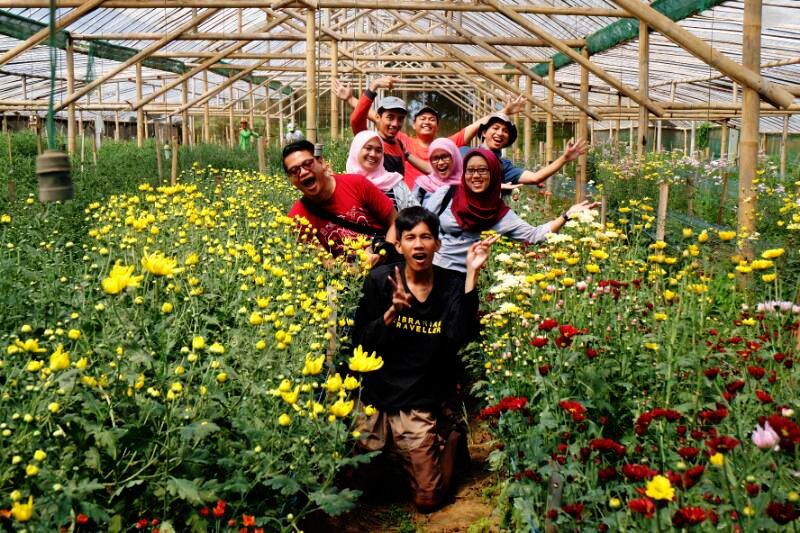 Swafoto di Kebun Bunga Krisan Poncokusumo