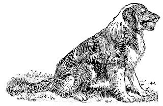 dog shepherd animal illustration digital clipart vintage image