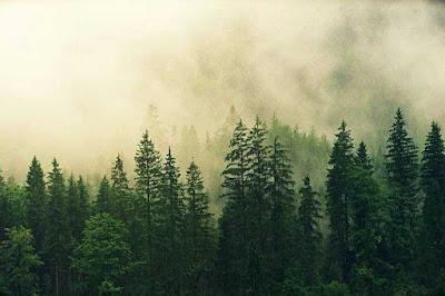 Proses Pohon Menyimpan Air