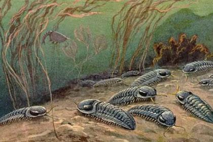 [LENGKAP] Zaman Paleozoikum : Ciri - ciri dan Periode