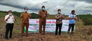 Aceh Timur Kini Punya  Ubi Sibereh  Varietas Lokal