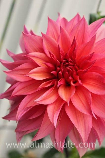 اجمل الزهور والورد