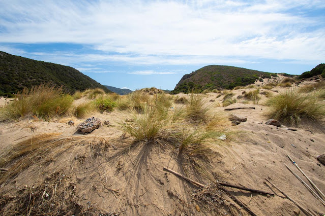 Spiaggia di Cala Domestica-Dune di sabbia