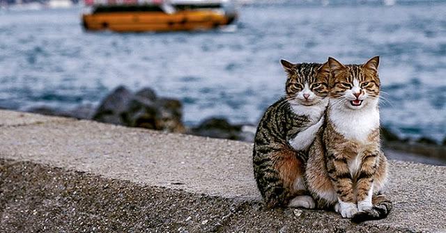 Мужчина сделал фото обнимающихся бродячих котов