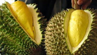 Manfaat dan Efek Samping Buah Durian Untuk Kesehatan Dan Kecantikan