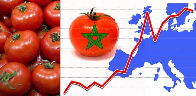 El sector hortofrutícola europeo denuncia que Marruecos está incumpliendo el acuerdo comercial y destrozando el mercado europeo del tomate.