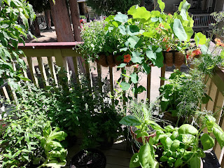 One corner of a balcony garden overflowing with plants