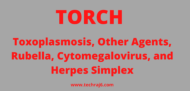 TORCH full form, What is the full form of TORCH