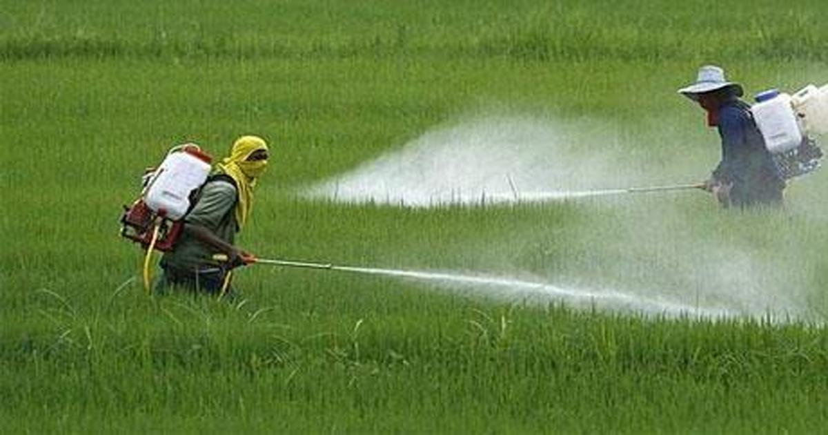 Chất thải nông nghiệp là gì? - Tại sao phải thu gom rác thải nông nghiệp