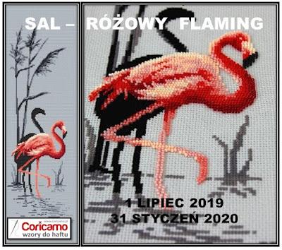 Sal różowy flaming – podsumowanie etapu #2