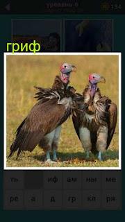 на поле стоят две птицы гриф в поисках добычи 667 слов 6 уровень