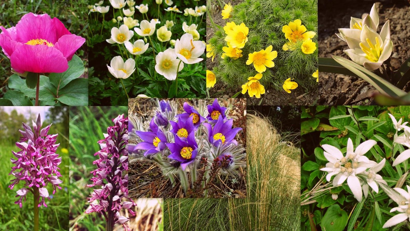 Зникаючі рослини : Зникаючі рослини України