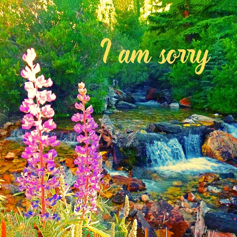 i am sorry cute baby images