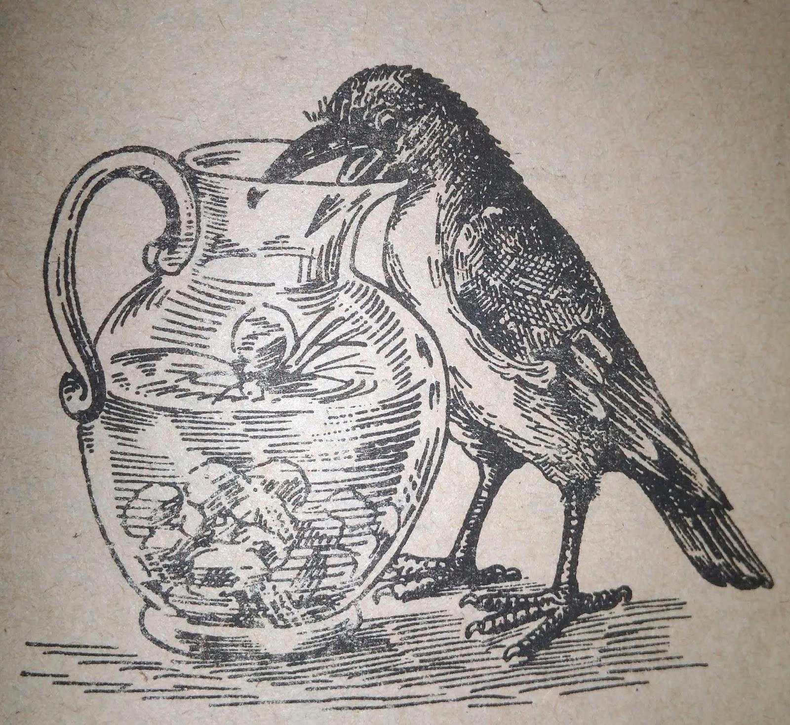 Kisah Burung Gagak Dan Teko Inspirasi Dalam Menemukan Solusi Narasi Hikmah