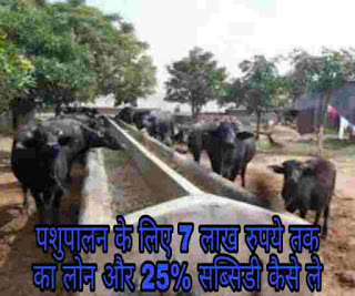 government scheme dairy farm up to rs 7 lakh loan and 25 parents subsidy for animal husbandry