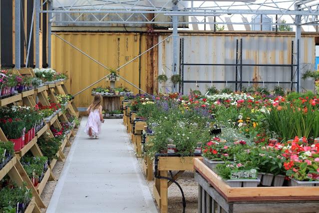Outdoor plants Solas