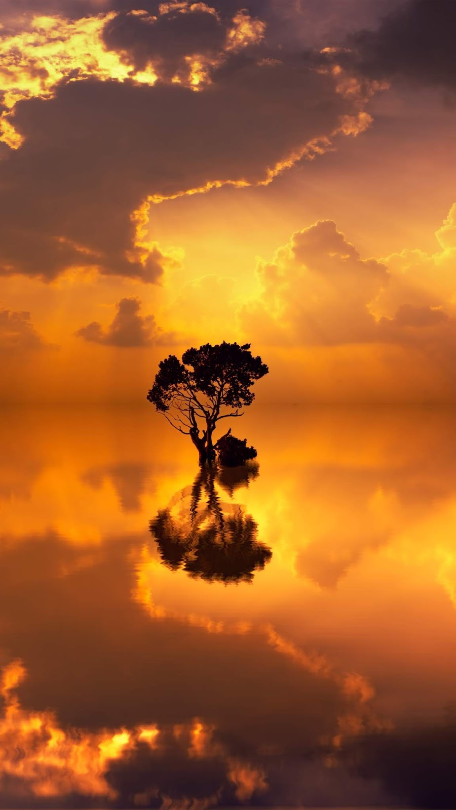 Lonely tree in the sunset