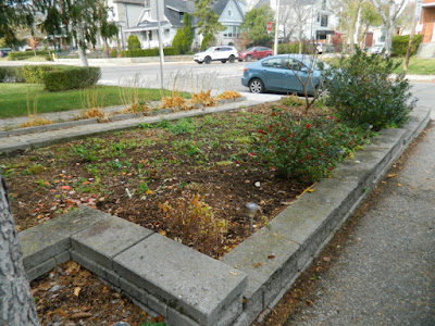 Toronto Bedford Park Fall Cleanup After by Paul Jung Gardening Services Inc.--a Toronto Organic Gardener
