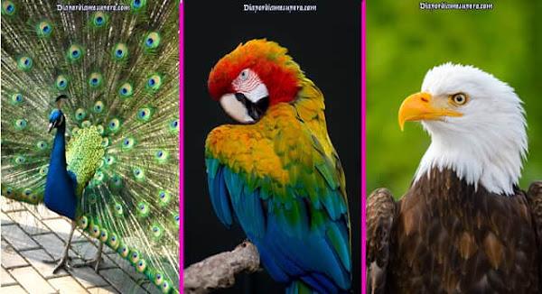 Test: Descubre qué revela de ti, el ave que elijas