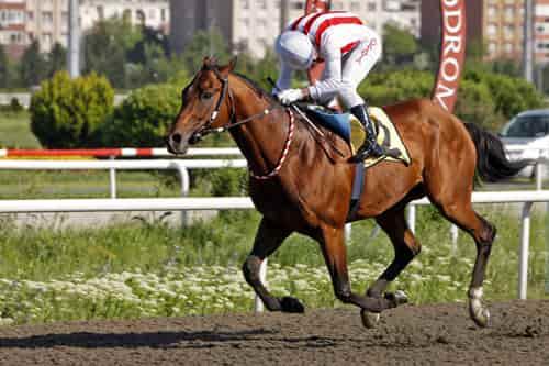 15 Haziran Adana At Yarışı Galopları