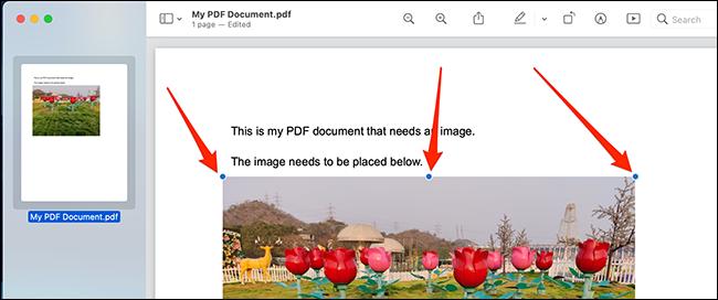 استخدم مقابض الكائن لتحديد موضع صورتك وتغيير حجمها في ملف PDF.