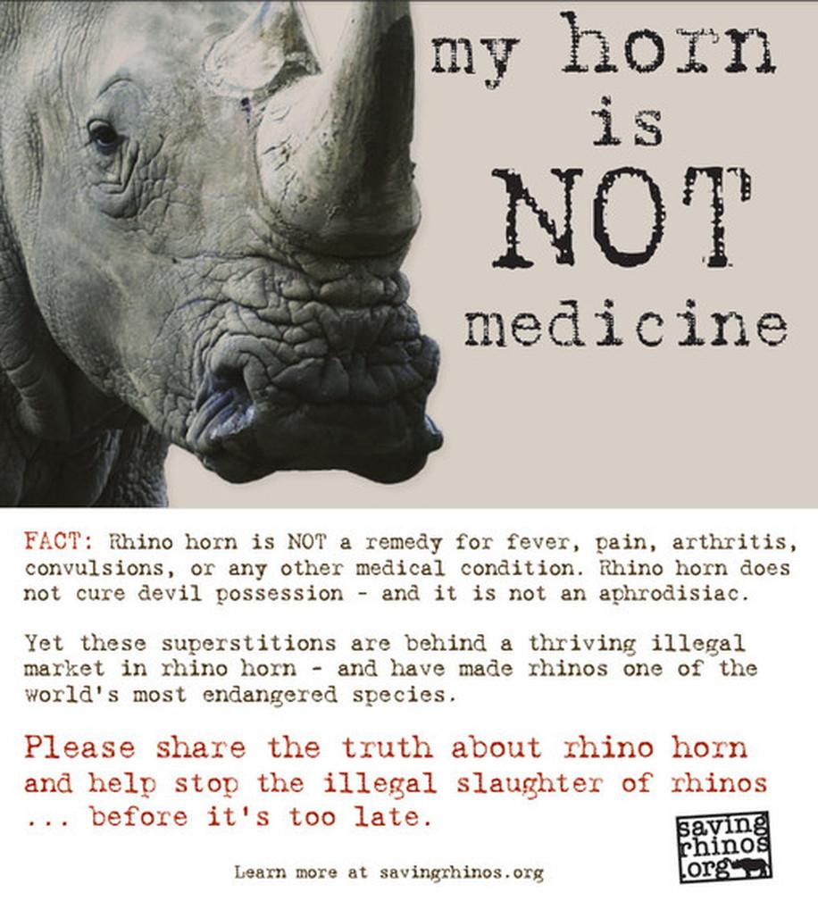 Anatomía de un zoocidio. La guerra contra los rinocerontes.