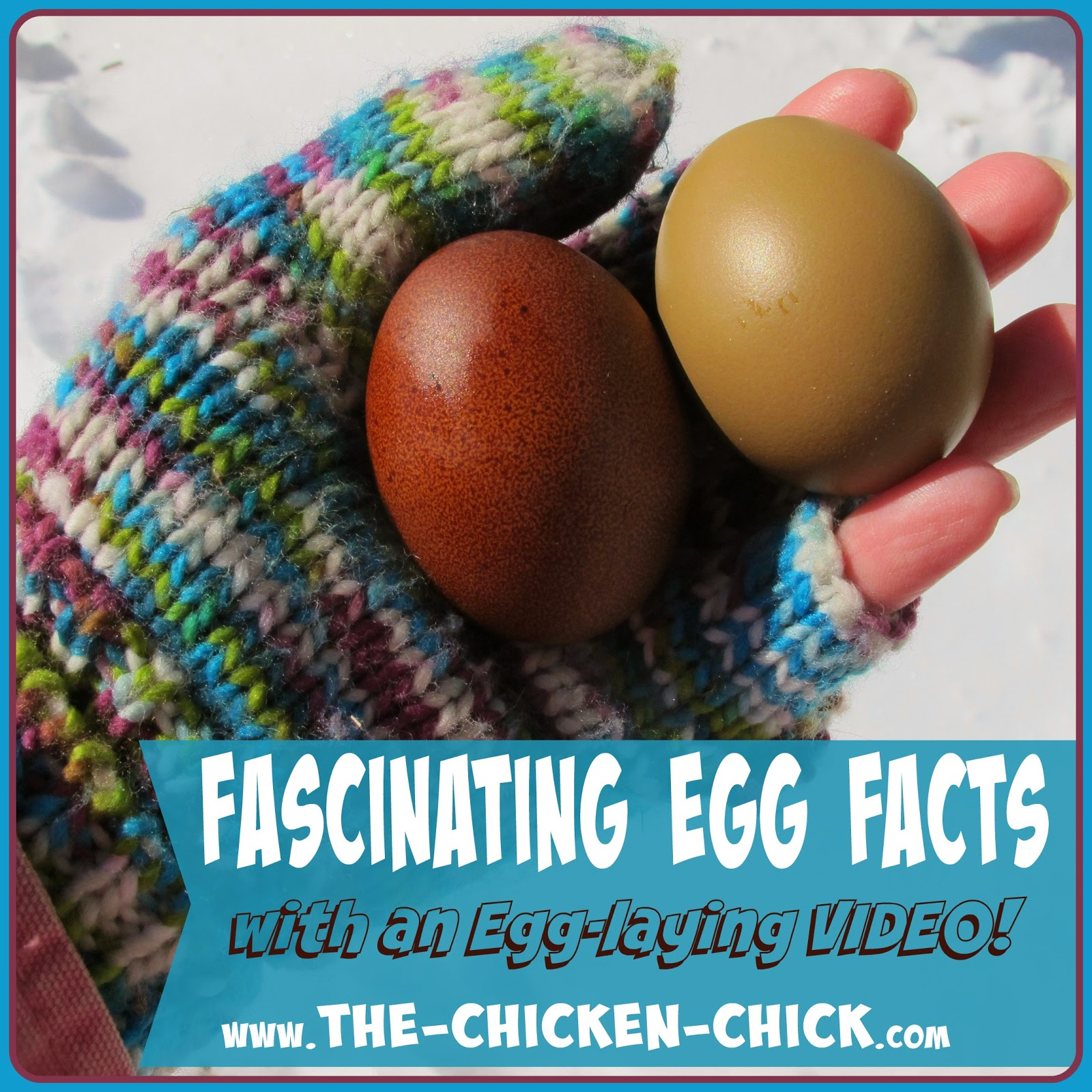 If you have never witnessed a hen laying an egg, it's your lucky day! I find the entire process of egg production is fascinating and thought you might like to know some fascinating facts about the mighty egg!