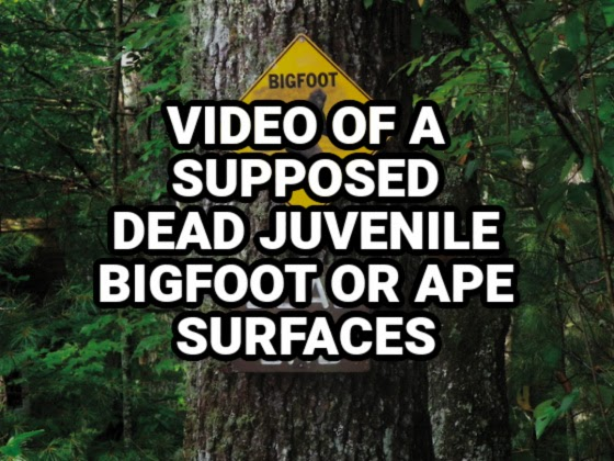 Video of a Supposed Dead Juvenile Bigfoot or Ape Surfaces