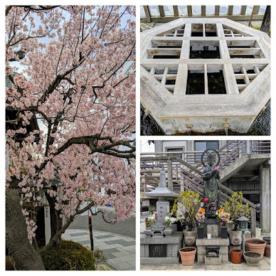 Springtime in Japan: cherry blossoms and Genchi well in Matsumoto
