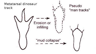 """Come le impronte dei dinosauri bipedi si sono trasformate in impronte """"umane"""""""