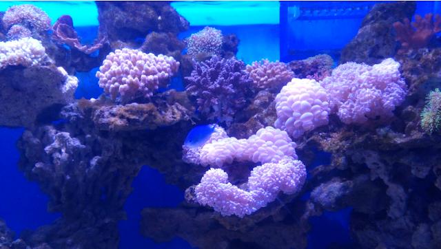jakarta aquarium neo soho www.tikacerita.com