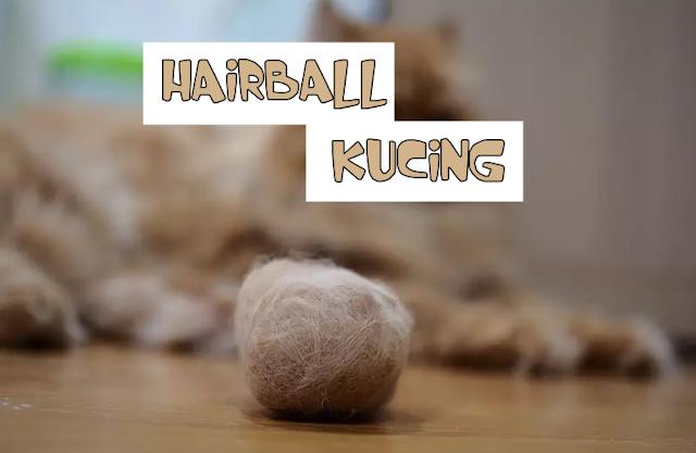 Kucing Hairball