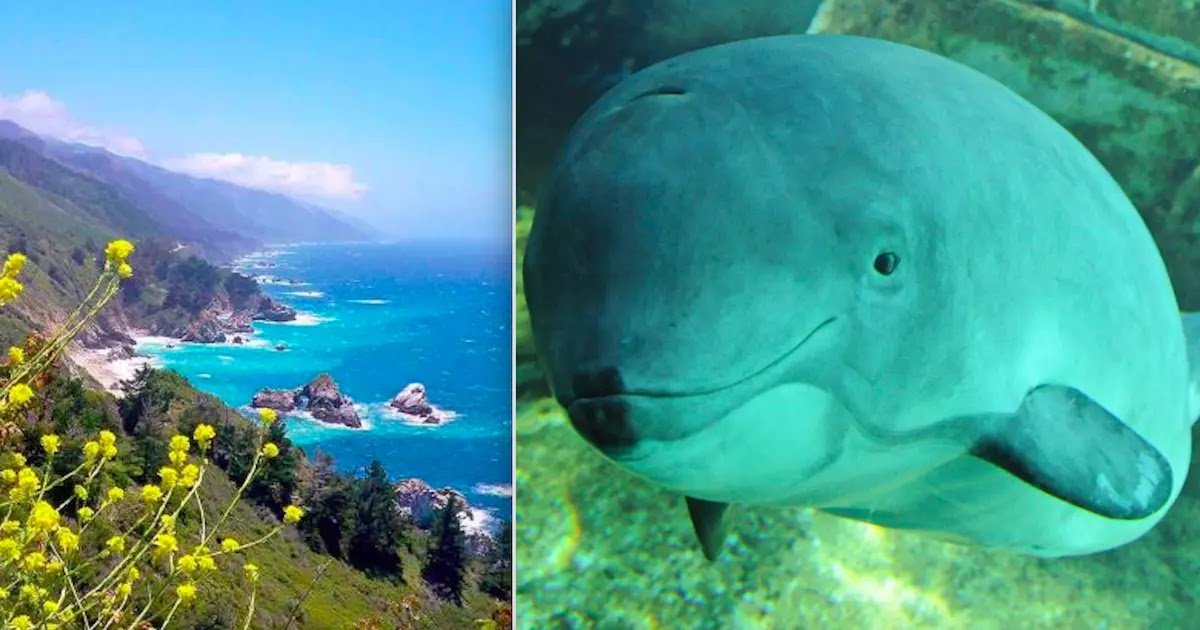 Porpoises And White Sharks Make Comeback Following California Ban On Indiscriminate Fishing Nets