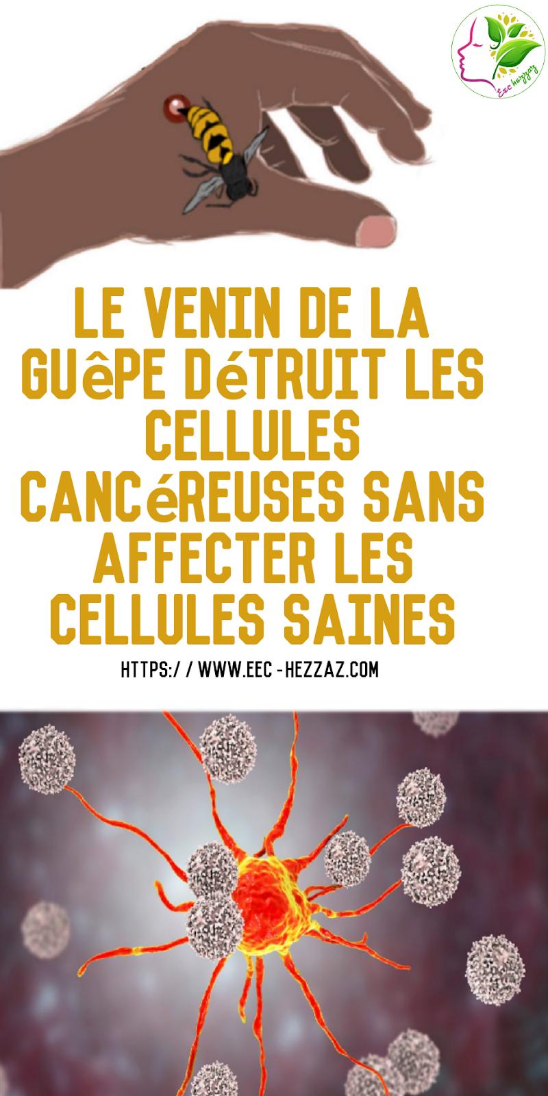 Le venin de la guêpe détruit les cellules cancéreuses sans affecter les cellules saines