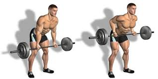 Top 6 Exercises for Increasing Back Muscles