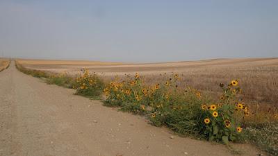 Montana, plants, wildflowers, landscape