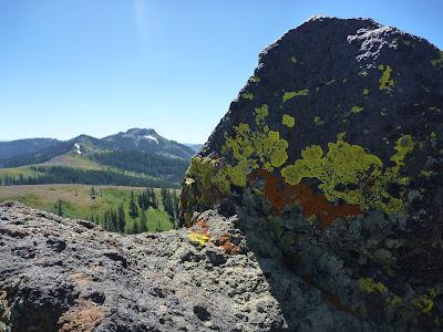 Pacific Crest lichen