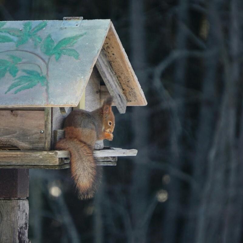Orava, luonto, suomen luonto