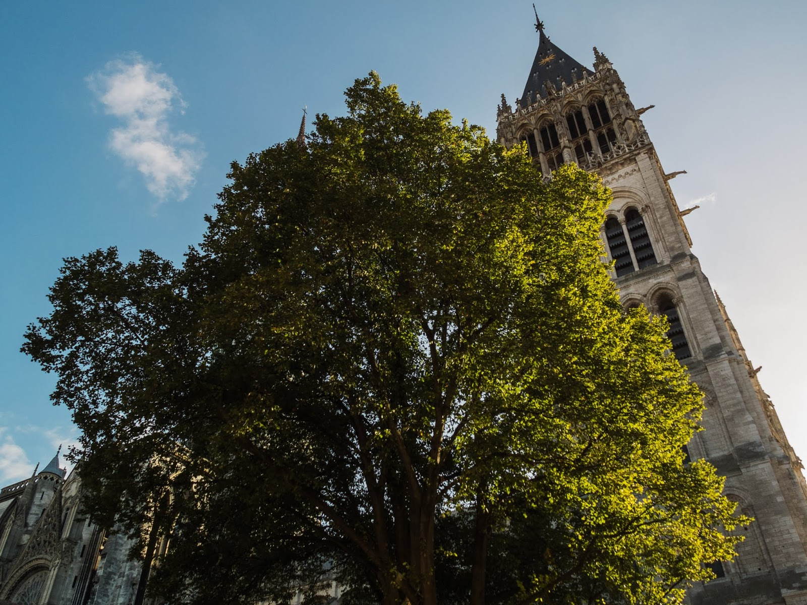 Looking up at a mature deciduous tree  glowing in sunlight outside the Notre Damme de Rouen, Northern France.