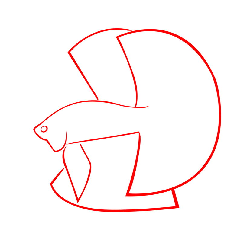 Kriteria Dan Penilaian Untuk Ikan Cupang Hias Kontes Aneka Hewan Peliharaan Dan Tanaman Hias