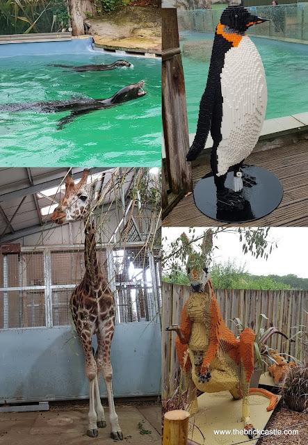 Knowsley animals LEGO #Ultimatebricksafari penguin kangaroo giraffe sea lion
